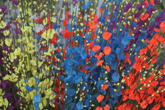 цветет multicolor Стоковое фото RF