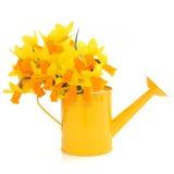цветет narcissus Стоковые Изображения