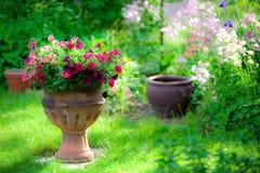 цветет nasturtium стоковые фотографии rf