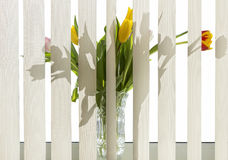 цветет windowsill Стоковое Фото