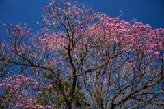 Цветистое дерево с красочными цветками стоковые изображения rf
