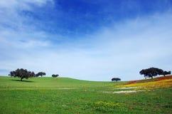 Цветистое поле в alentejo Стоковое фото RF