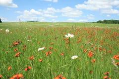 Цветистые поля 4 Стоковые Изображения
