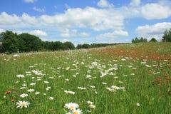 Цветистые поля 5 Стоковые Изображения RF