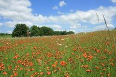 Цветистые поля 6 Стоковое Изображение