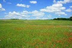 Цветистые поля 7 Стоковое Изображение