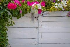 Цветистые украшения Стоковые Фотографии RF