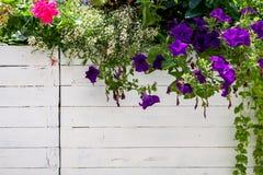 Цветистые украшения Стоковая Фотография RF