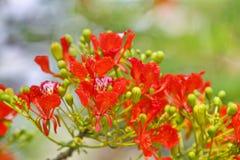 Цветистый в раннем лете Стоковая Фотография RF