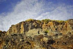 цветистый горный склон стоковые фото