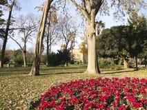 Цветистый угловойой парк Ciutadella. Стоковая Фотография RF