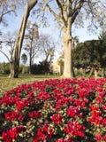 Цветистый угловойой парк Ciutadella. Стоковые Изображения