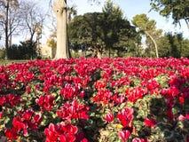 Цветистый угловойой парк Ciutadella Стоковая Фотография