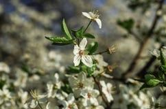 3 цветка конца-вверх цветения стоковое фото rf
