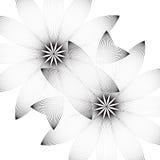 2 цветка на белой предпосылке Стоковая Фотография