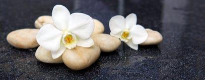 2 цветка орхидеи и белых камни Стоковые Фото
