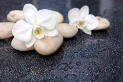 2 цветка орхидеи и белых камни Стоковое фото RF