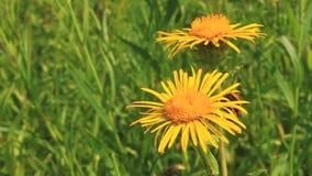 2 цветка сток-видео