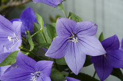 12 цветка Стоковые Фото
