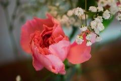 2 цветка Стоковая Фотография