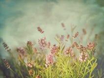 Цветки лаванды с винтажными цветами Стоковые Фотографии RF