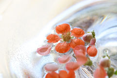 Цветки айвы плавая в воду Стоковые Фотографии RF