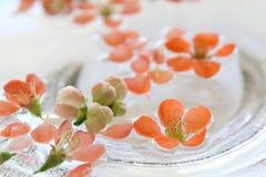Цветки айвы плавая в воду Стоковое Изображение RF