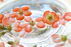 Цветки айвы плавая в воду Стоковая Фотография