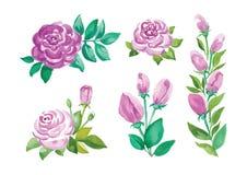 Цветки акварели в различных стилях Стоковая Фотография