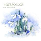 Цветки акварели для вашего дизайна Предпосылка акварели для вашего дизайна вектор Стоковое Изображение