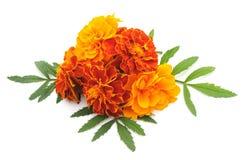 Цветки апельсина букета Стоковые Изображения RF
