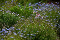 Цветки далеко от дома 1 Стоковые Фото