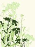 цветки бабочек предпосылки флористические Иллюстрация штока