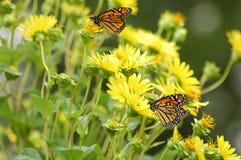 цветки бабочек стоковое изображение