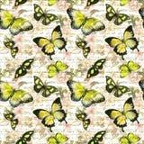 Цветки, бабочки, примечание письменного текста руки акварель картина безшовная Стоковое Изображение