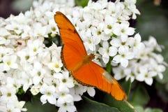 цветки бабочки Стоковые Изображения