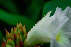Цветки баклажана шикарный приглашать взгляда цветов стоковое фото