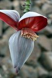 цветки банана стоковое фото
