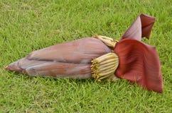 Цветки банана Стоковые Фотографии RF