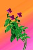 Цветки барвинка Стоковые Фотографии RF