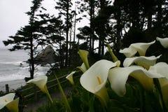 Цветки береговой линии стоковая фотография
