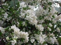 Цветки белой бумаги Стоковое фото RF