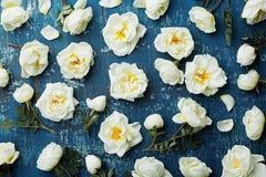 Цветки белой розы и листья зеленого цвета на голубой деревенской предпосылке сверху Красивый цветочный узор в винтажном цвете и п Стоковое фото RF
