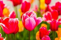 Цветки - ботанический сад Стоковая Фотография