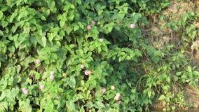 Цветки Буша Стоковое Фото