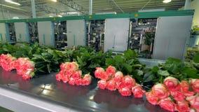 Цветки будучи сортированным на фабрике цветка видеоматериал