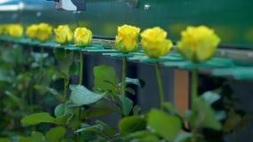 Цветки будучи транспортированным машиной фабрики сток-видео