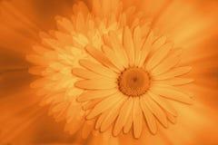 цветки ввели в моду стоковое изображение