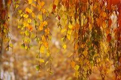 Цветки, весна, цветения, жасмин, помадка, белизна, падения, роса, листья, ветвь, покрашенная предпосылка, старый, треснутый, древ Стоковые Фотографии RF