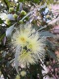 Цветки весной вылазка весны стоковое изображение